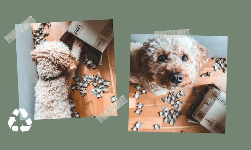 Nachhaltige Hundebeschäftigung drinnen mit einem einfachen Karton