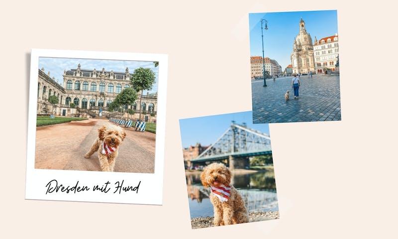 Dresden mit Hund:12 Tipps für einen schönen Städtetrip