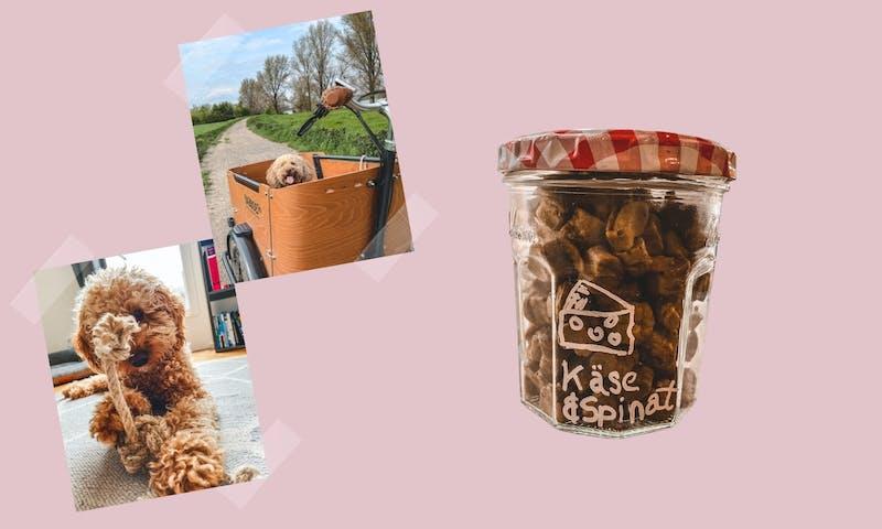 Nachhaltig Leben mit Hund: 12 einfache Tipps für den Alltag