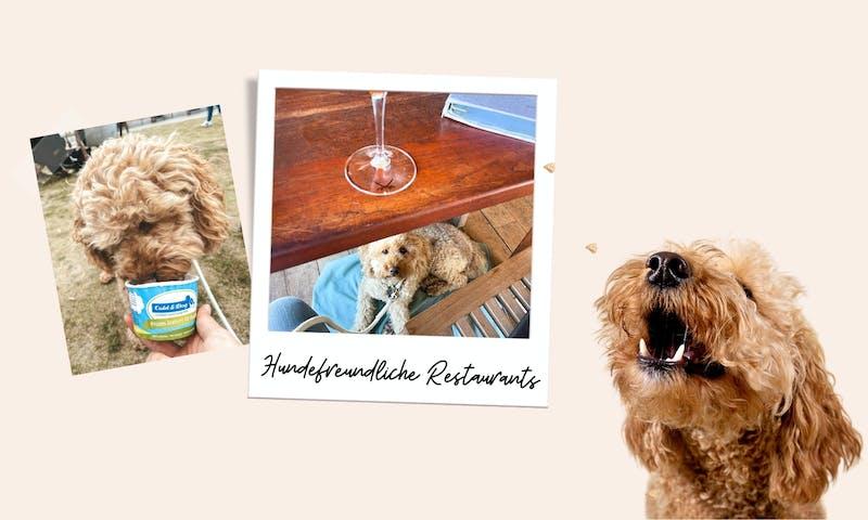 Hundefreundliche Restaurants und Cafés auf Sylt
