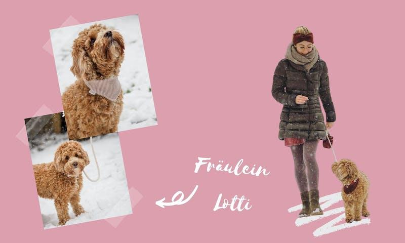 Hundemanufaktur Fräulein Lotti