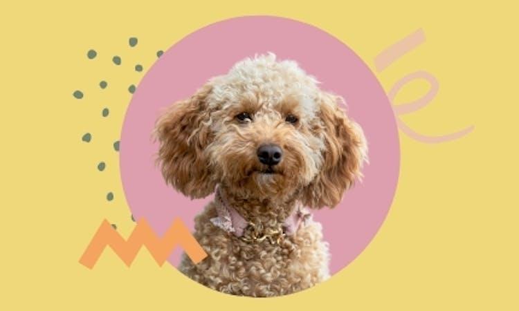 Der Hundeblog über Bürohunde