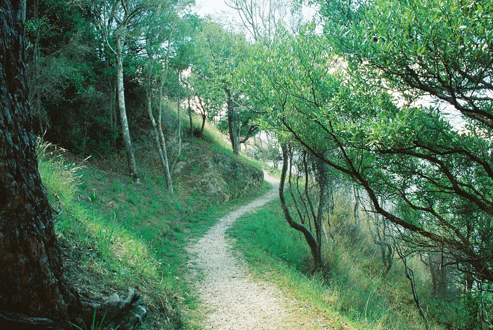 A path winding through very green trees