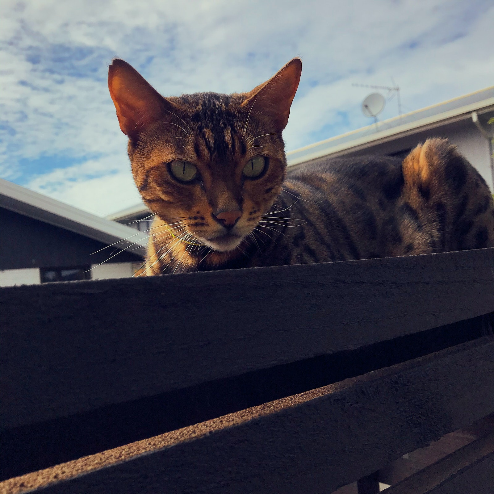 A cat on top of a fence
