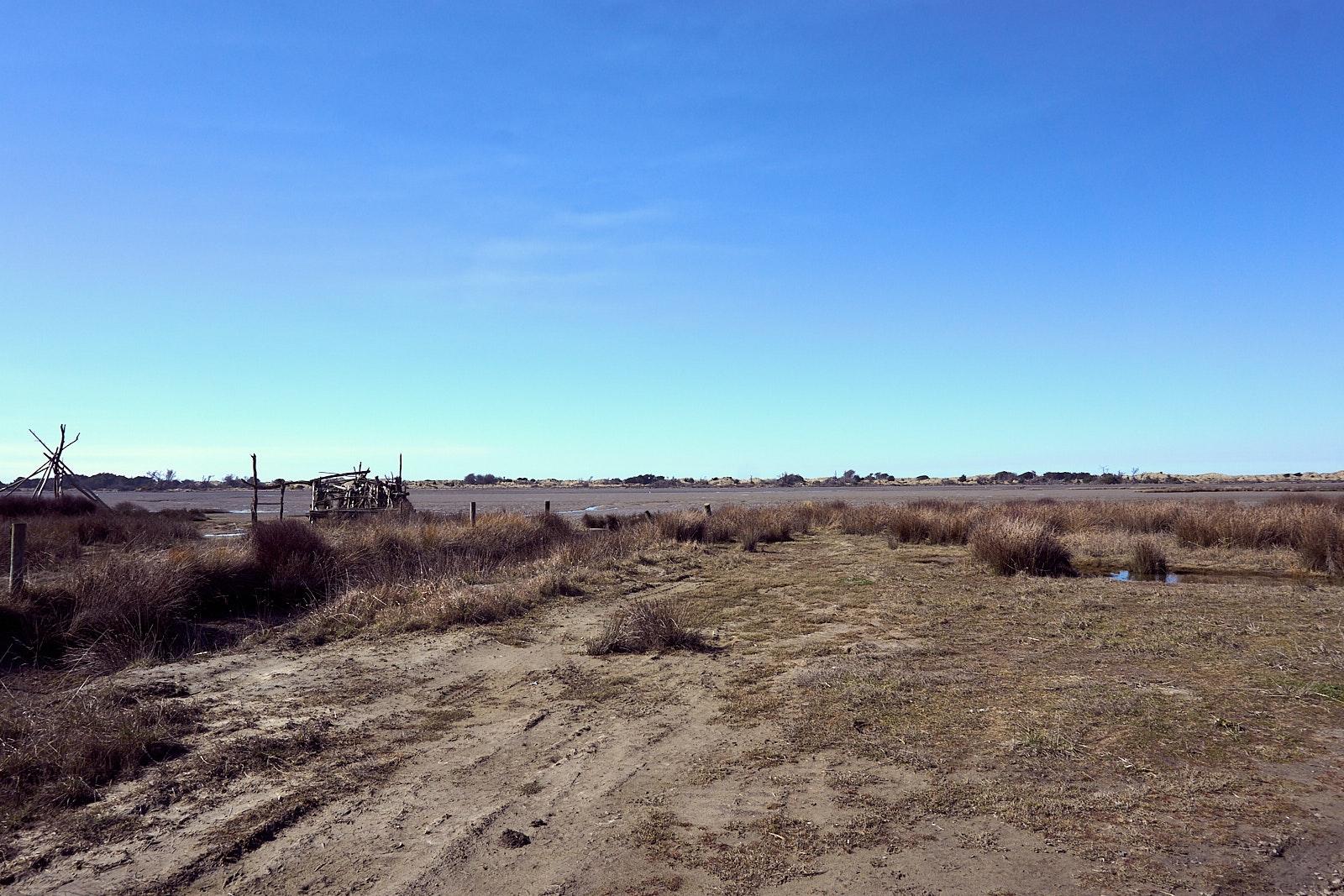 Beach and grassland