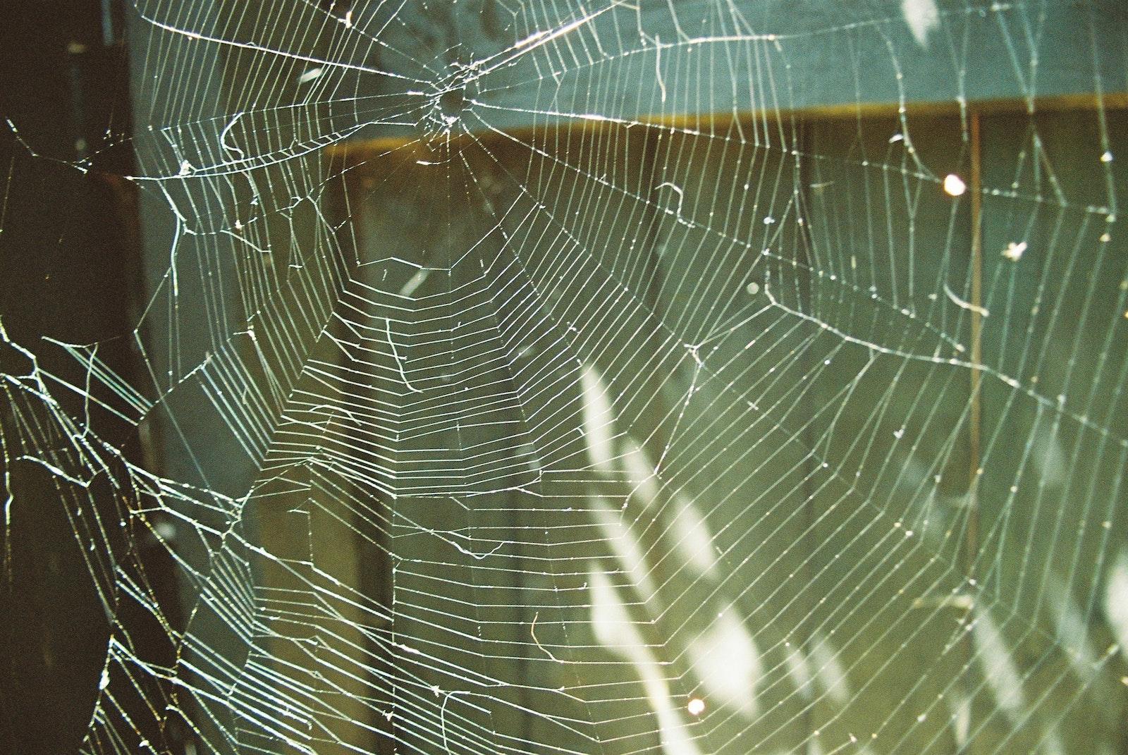 A spiderweb lit by sun