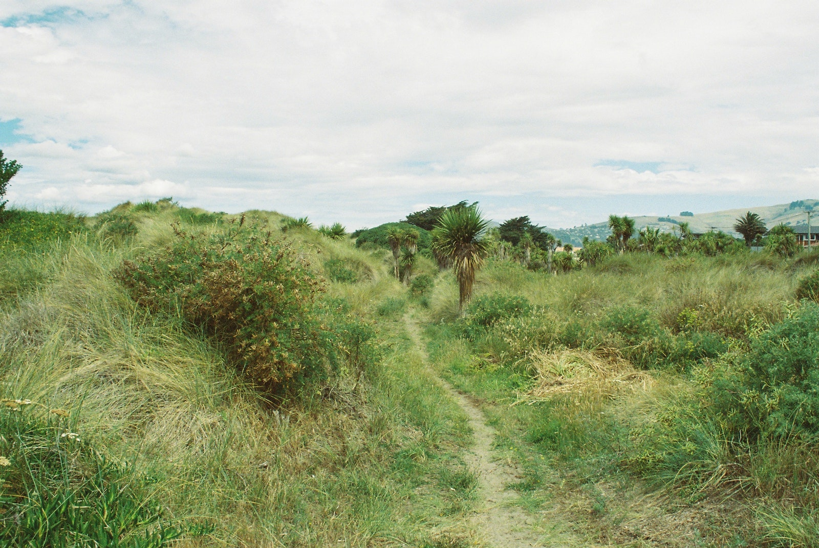 A path through sand dunes covered in grasses