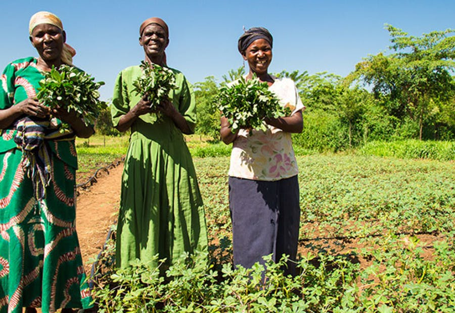 Scaling agriculture in africa