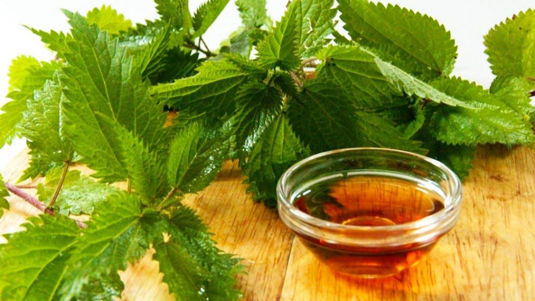 nettle oil for afro hair