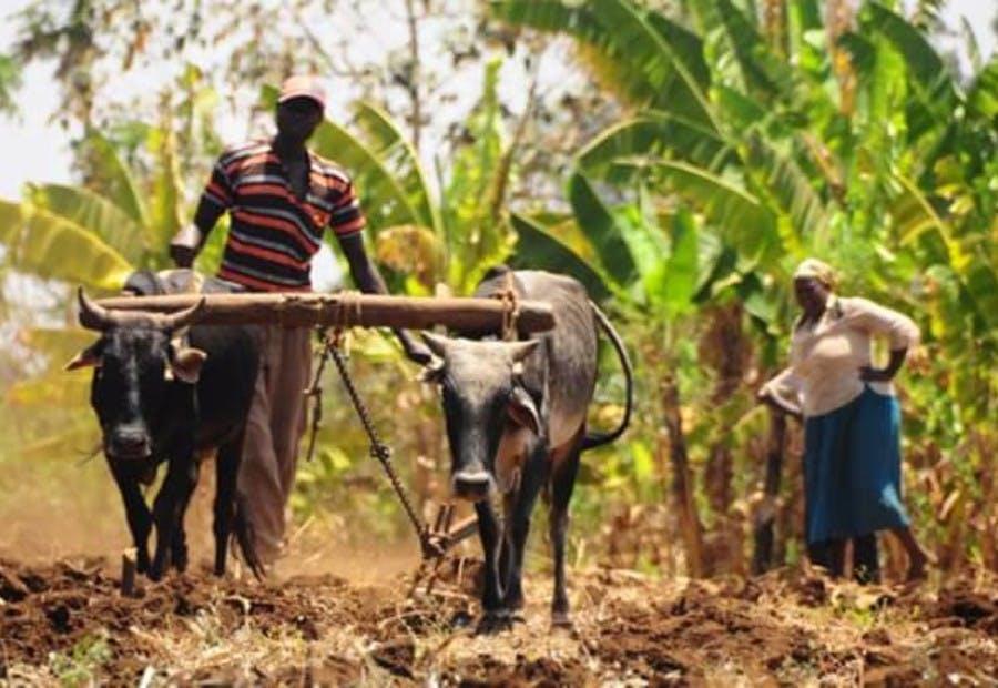 Organic Farming in Africa