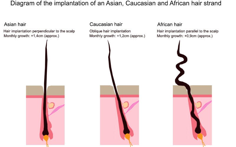 diagram of african hair strand to support afro hair growth