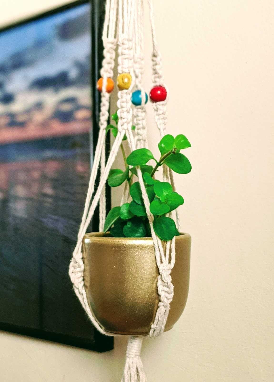Enjoy my little macrame pot to give me a little bit of greenery and little CO2 conversion