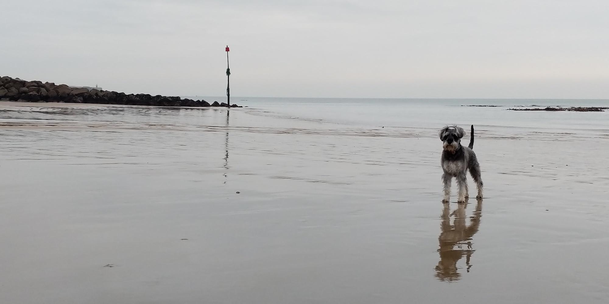 Maisie Dog on sandy Folkestone beach