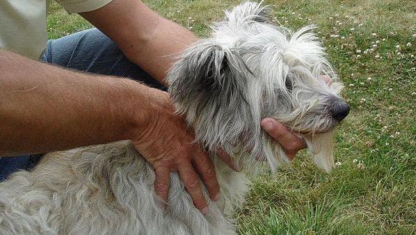 K9 SWiM - Osteopathy for the Senior Dog