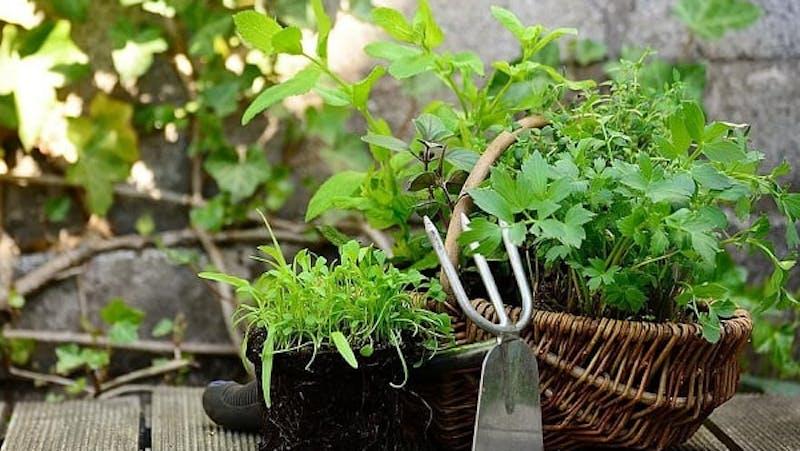K9 SWiM - Grow Your Own Herbal Garden For Your Pet!