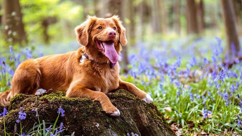 K9 SWiM - Preparing your Dog for Spring