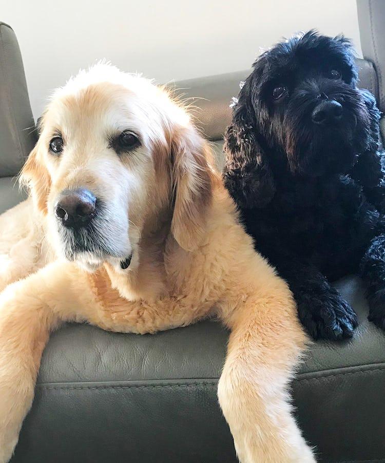 K9 SWiM Testimonial - Rusty and Charlie