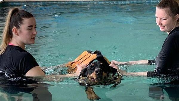 K9 SWiM - Rehabilitation For Your Dogs
