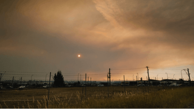 K9 SWiM - Handling Bush Fire Smoke and Your Dogs