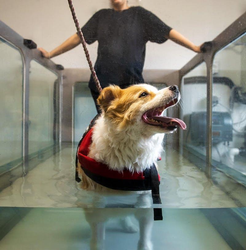 K9 SWiM Hydrotherapy Centre Treadmill