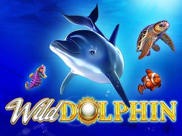 wild dolphin advertising banner kagino for gameart