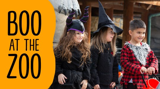 Kansas City Zoo Halloween 2020 Boo At The Zoo Events