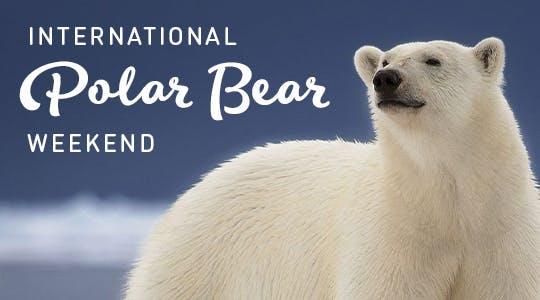 Polar Bear Weekend