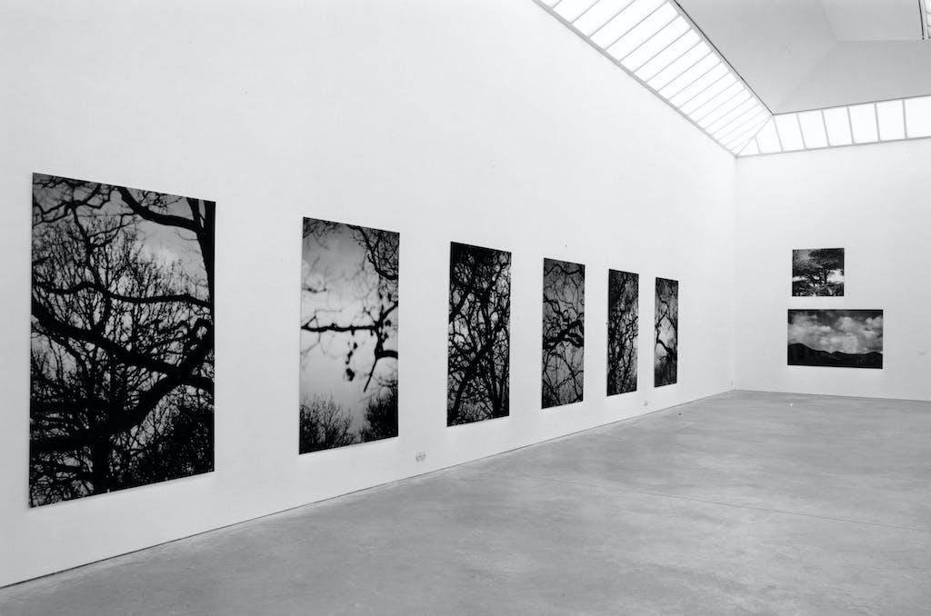 Seton Smith, Blue Branches