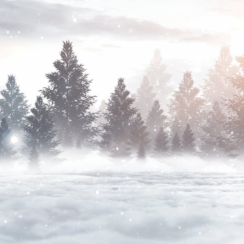 winter tree landscape background image