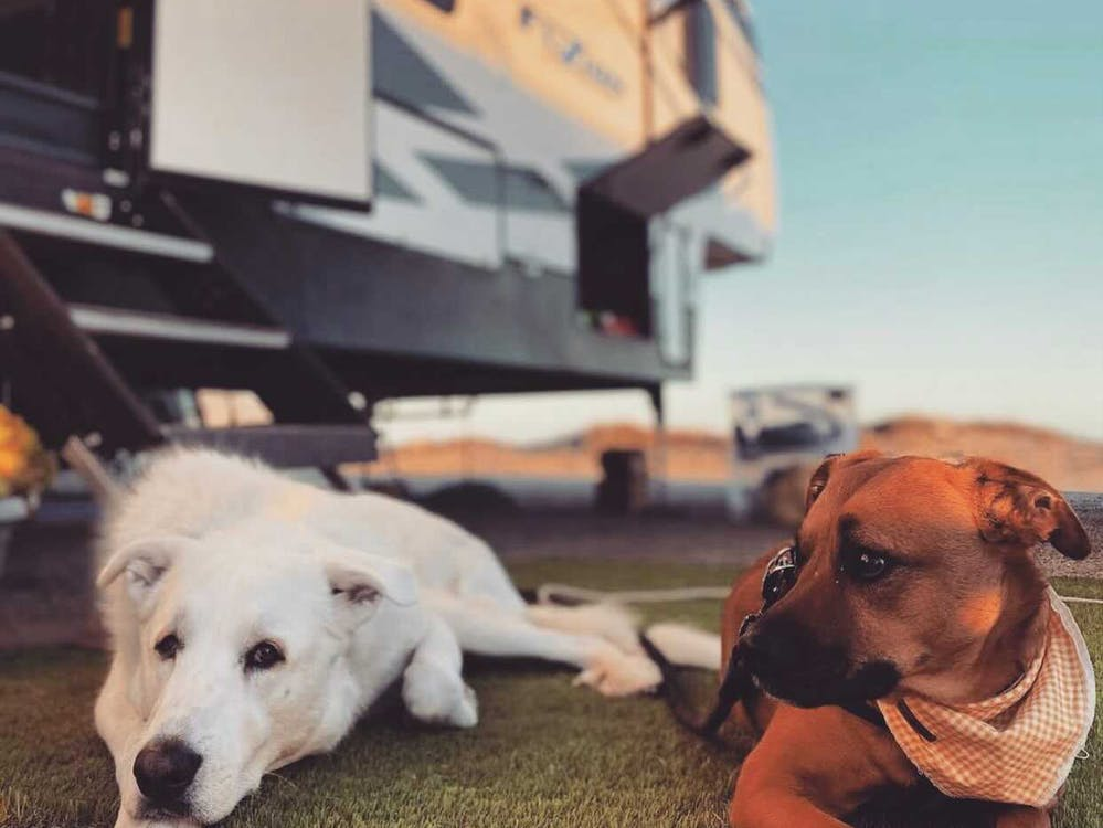 Dogs lying in front of an RV.