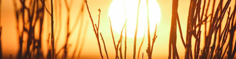 Setting sun behind tall grass