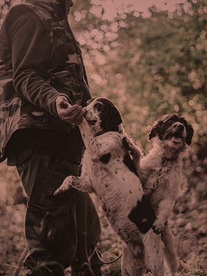 Man in the woods with two dogs.