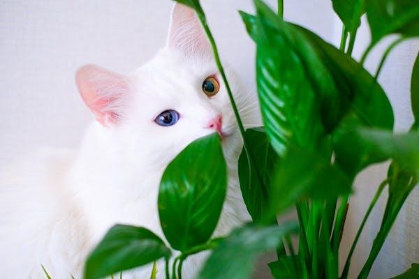 ангорская кошка для ребенка