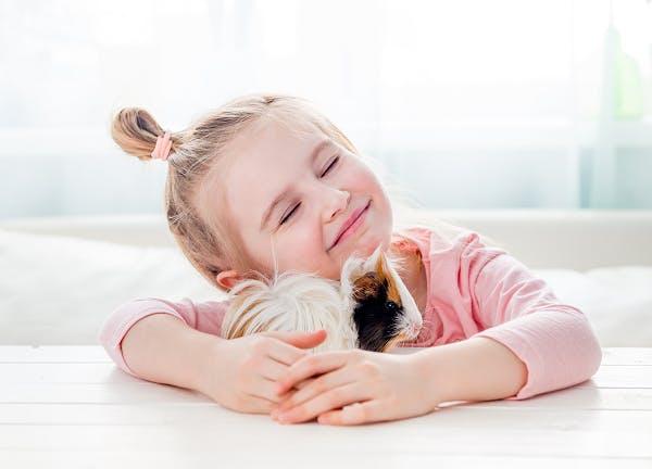 морская свинка для ребенка