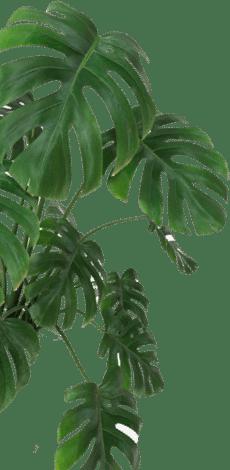 feuilles de palmier de couleur verte