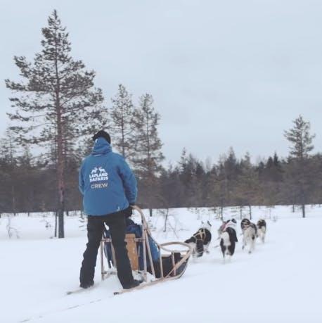 Guida della slitta trainata dagli husky in Lapponia
