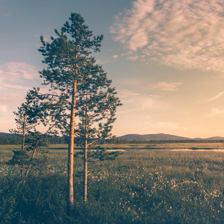 Bilder der Natur in Lappland