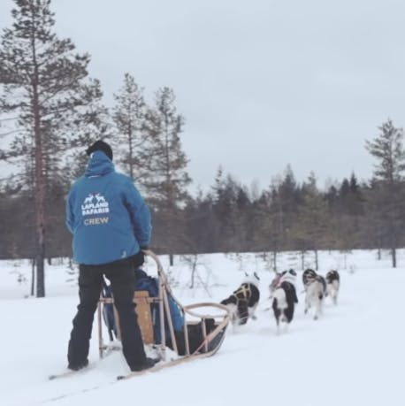 How to ride a husky sledge in Lapland