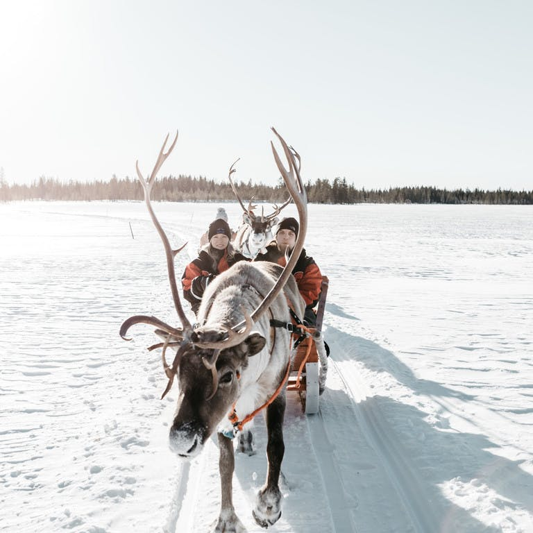 Reindeer activities in Lapland
