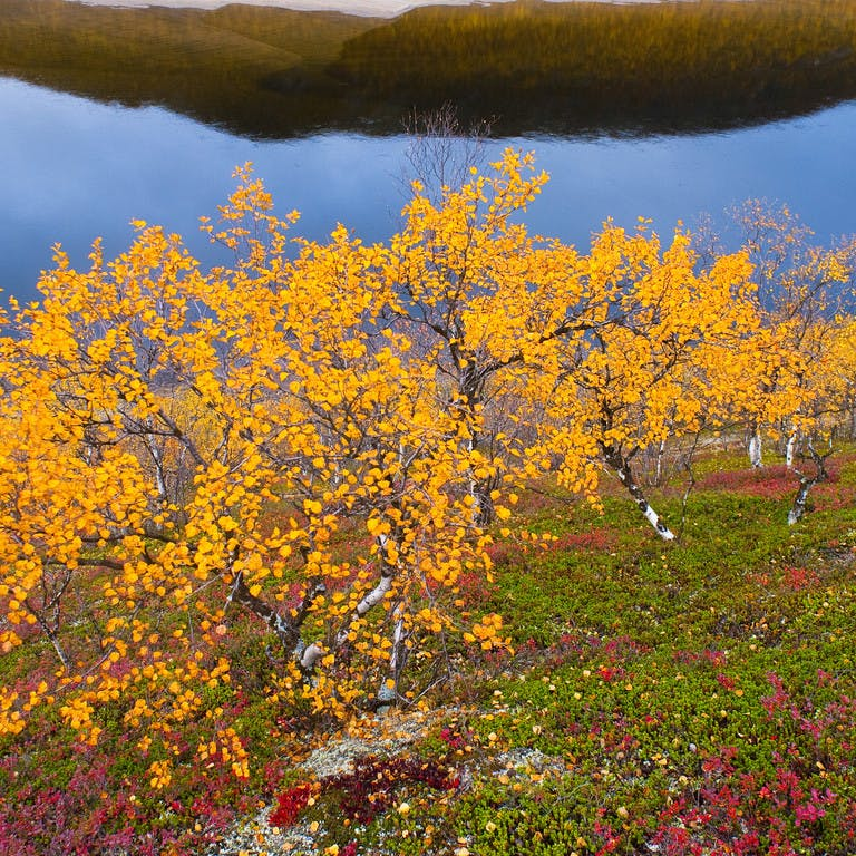 Herbst in Lappland