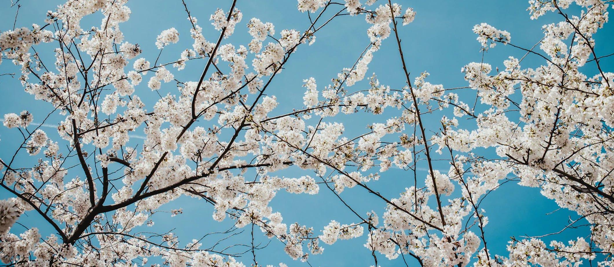 Les bonnes histoires – Épisode 1, la maison aux cerisiers