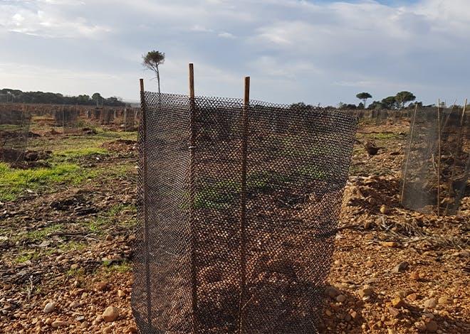 8 hectares  dereboisement sur lavingtaine d'hectaresd'ores et déjà  reboisésàGénérac