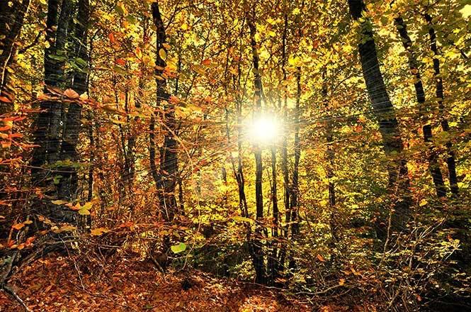 Des projets responsables pour préserver les forêts en France…