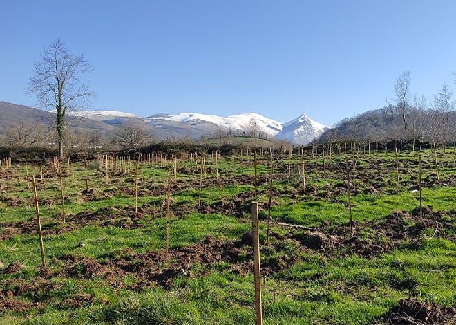 Dans les Pyrénées-Atlantiques, le projet de reforestation de la vallée d'Hergaraï, piloté par la SCIC Sugarai avec l'appui du CRPF, a obtenu le label bas carbone