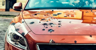 How To Get Bird Poop Off Your Car In 4 Easy Steps