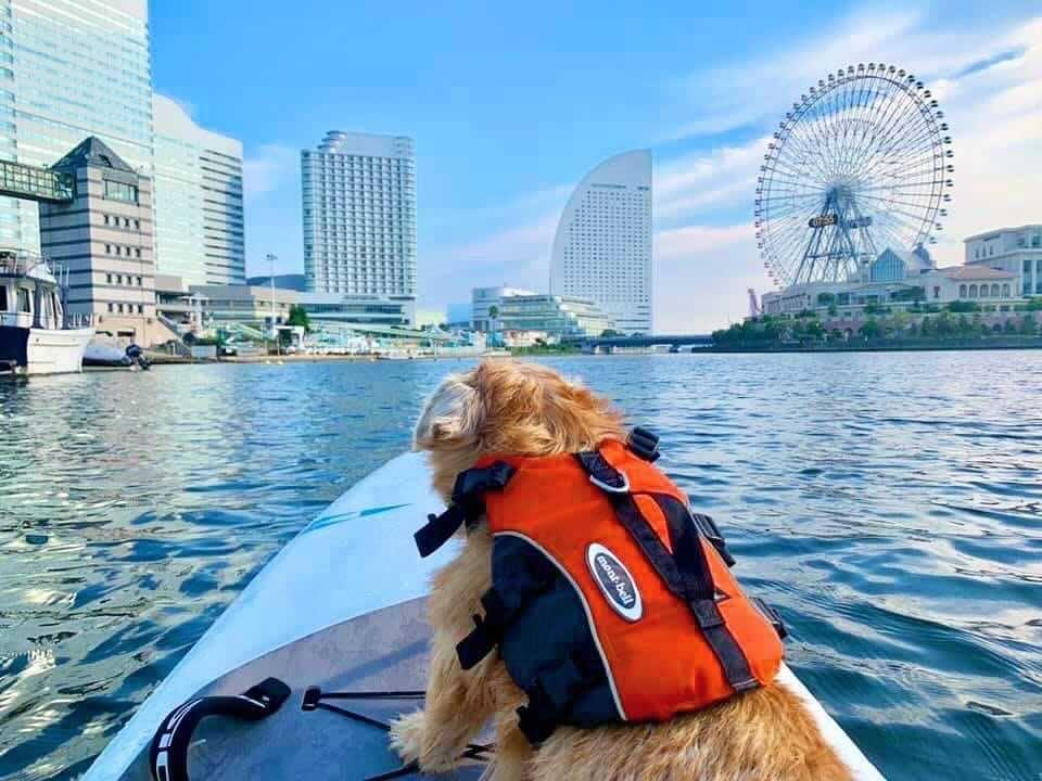 360度、視界に広がる横浜のランドマーク