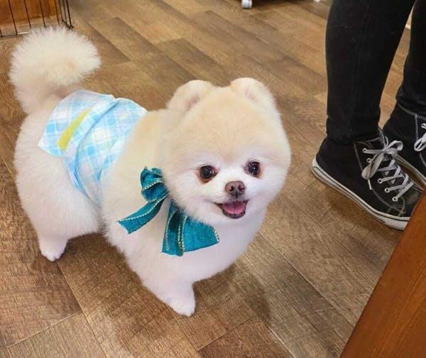 トリミングサロンで笑顔のゆず汰くん(@yuzuta0919)