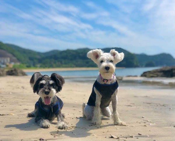 海を楽しむcookieちゃんとヴィアンカちゃん(@cookiecookie323)