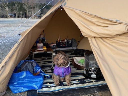 キャンプデビューから4年。今ではすっかりアウトドアドッグ!