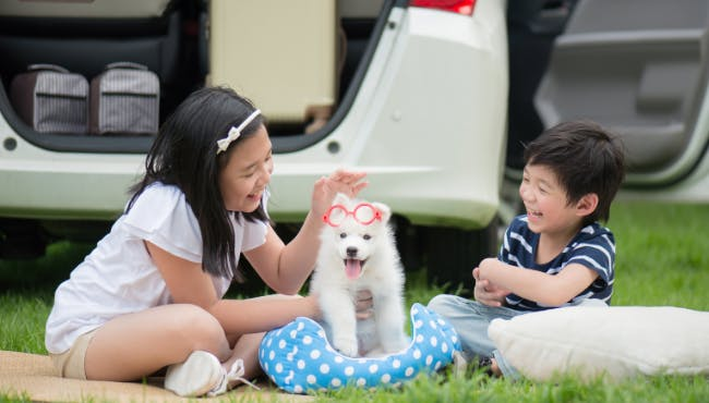 🐶犬と子供、良好な関係づくりのためのポイントは?